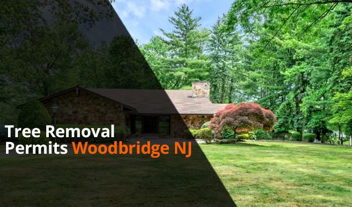 Tree removal permit Woodbridge v1