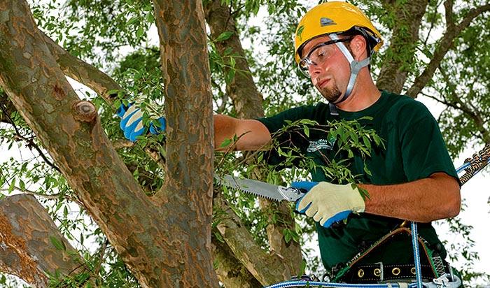 Tree removal permit Woodbridge v2