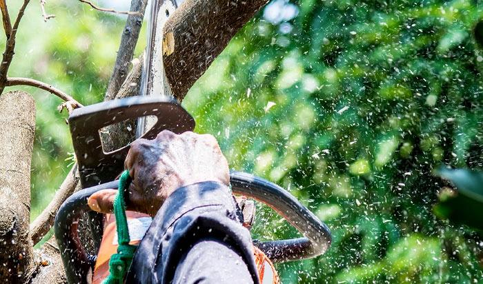 Tree removal permit clifton v2