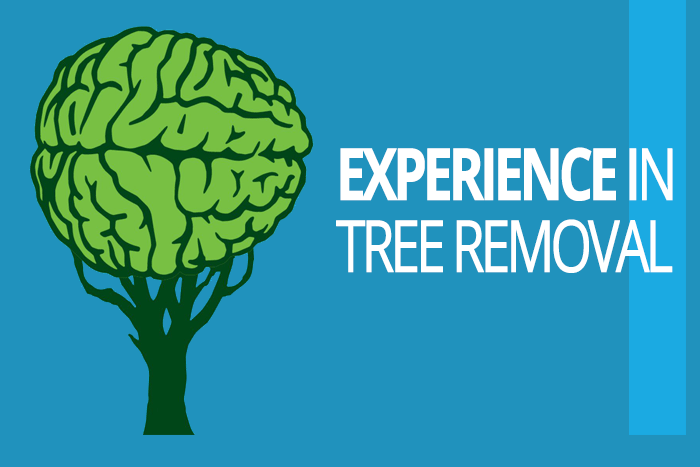 EXPERIENCE IN TREE REMOVAL