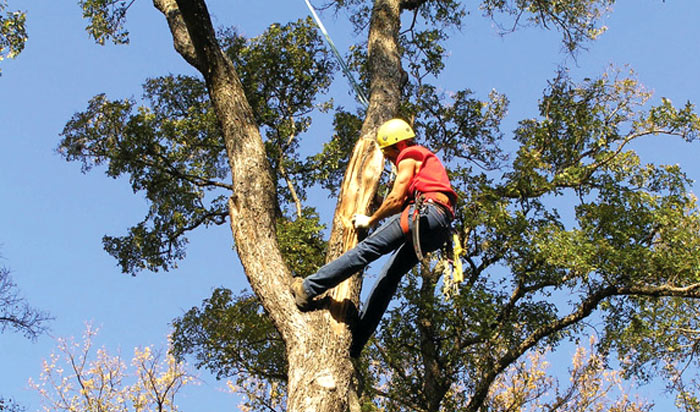 Tree removal permit Atlanta v2