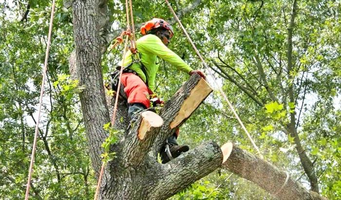 Tree removal permit Augunta v2