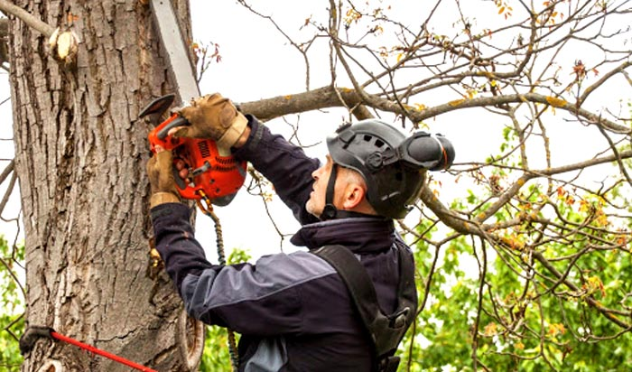 Tree removal permit Columbus v2