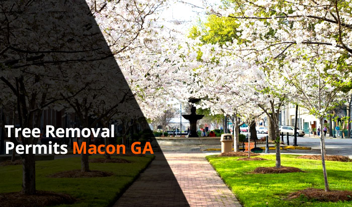 Tree removal permit Macon v1