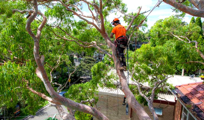 Tree removal permit Roswell v2