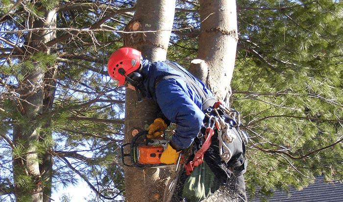 Tree removal permit Sandy Springs v2
