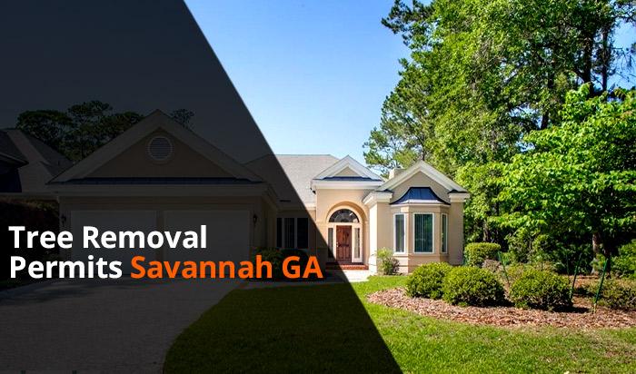 Tree removal permit Savannah v1