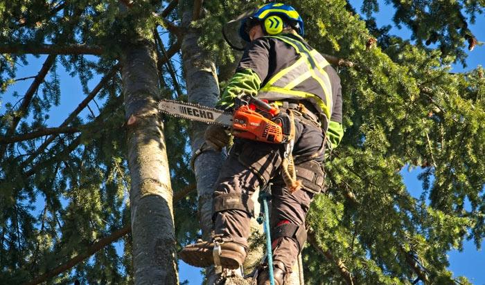 Tree removal permit Savannah v2