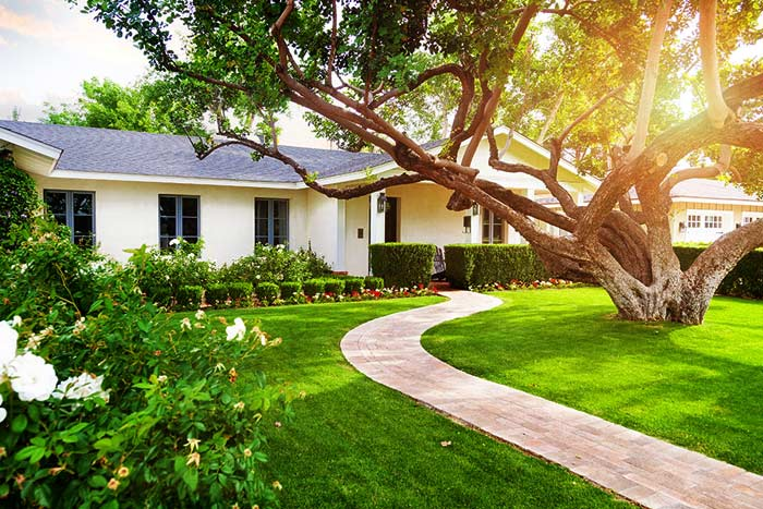 beautiful tree gives curb appeal