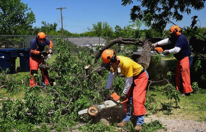 cutting up fallen tree in yard