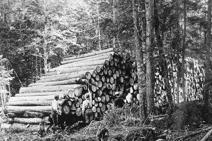 loggin in the 1900s