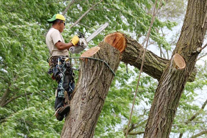 penalty for cutting down tree without permit