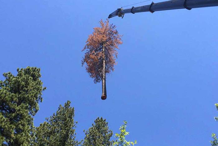 Hazardous tree removal near me