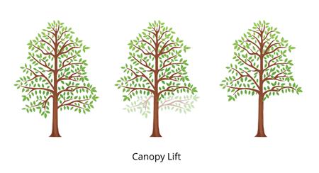 canopy lift3fullcolor450x350