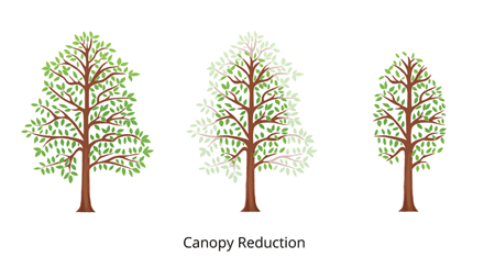 canopy tree reduction3fullcolor450x350