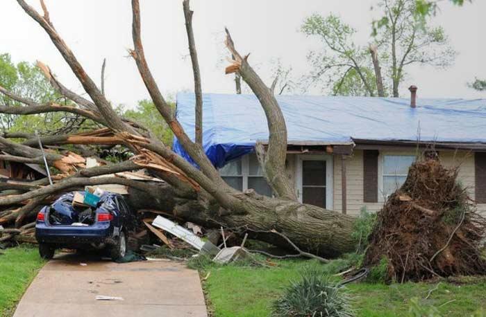dead tree fallen on home