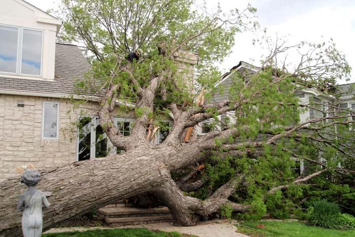 hazardous tree damaged in storm