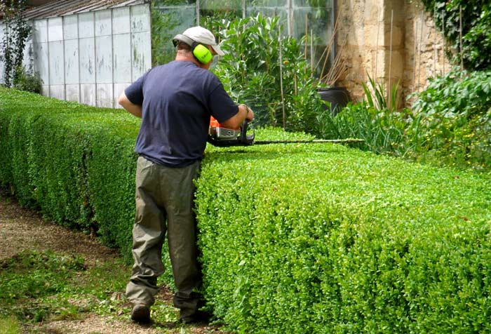 hedge-trimming service near me