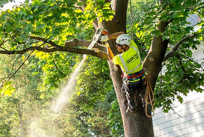how often should you trim a tree