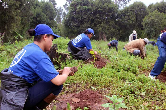 planting 350 million trees in one day