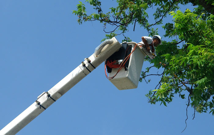professional tree pruning company