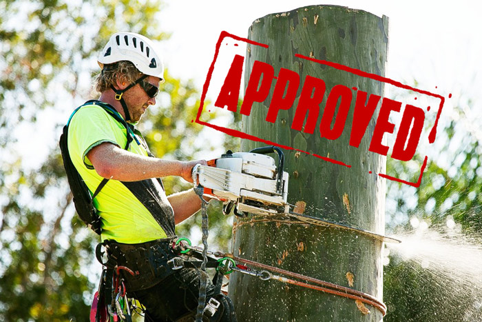 tree cutting permit approved