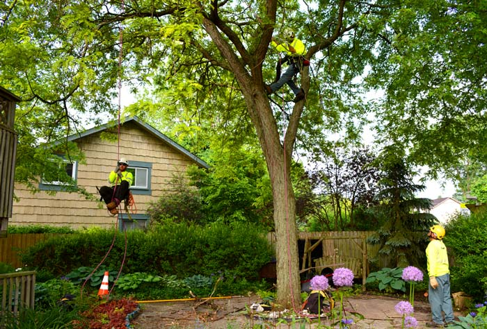 tree experts in your area at work