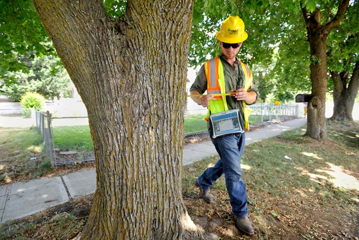 tree expert collecting data for arborist report