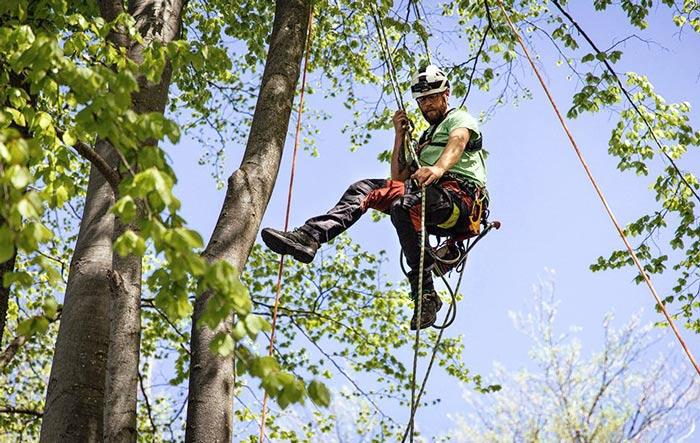 tree maintenance company trimming tree