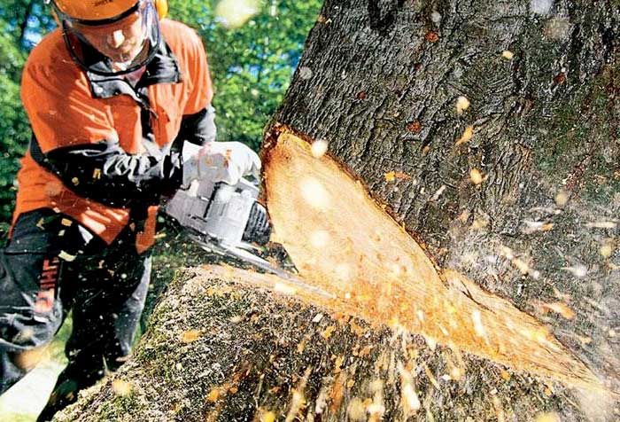 what situations are tree removal services needed