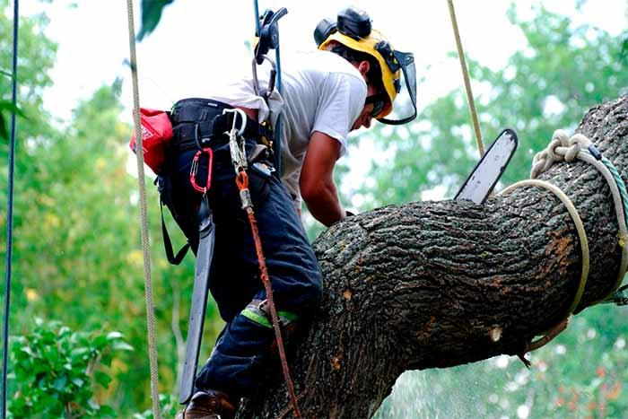 3 tricks to saving on tree removal worker trims tree