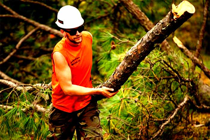5 Questions to ask tree trimming companies man hold tree