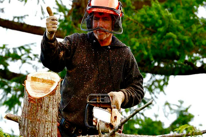 Are there free tree removal companies happy man