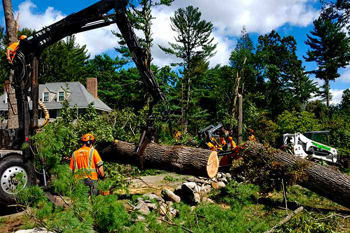Can I claim tree removal on insurance tree removal company remove trees