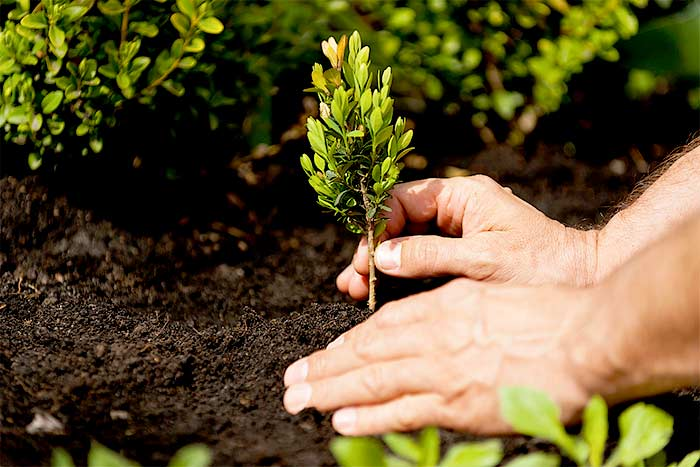 Can I plant a tree on my property line plant a new tree