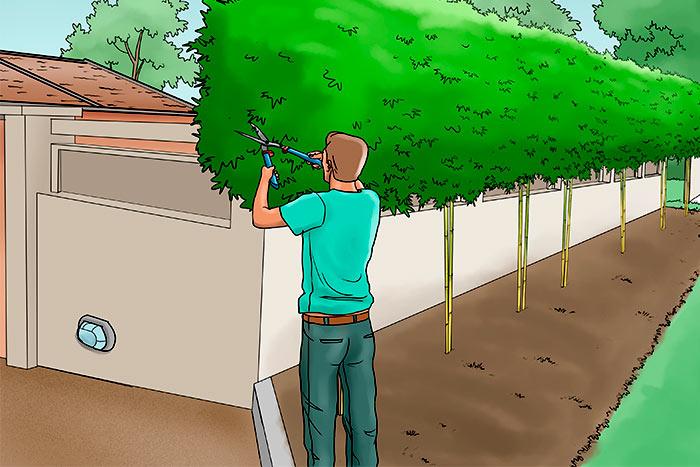 Can I trim my neighbor's tree overhanging my fence man cut neighbor's tree