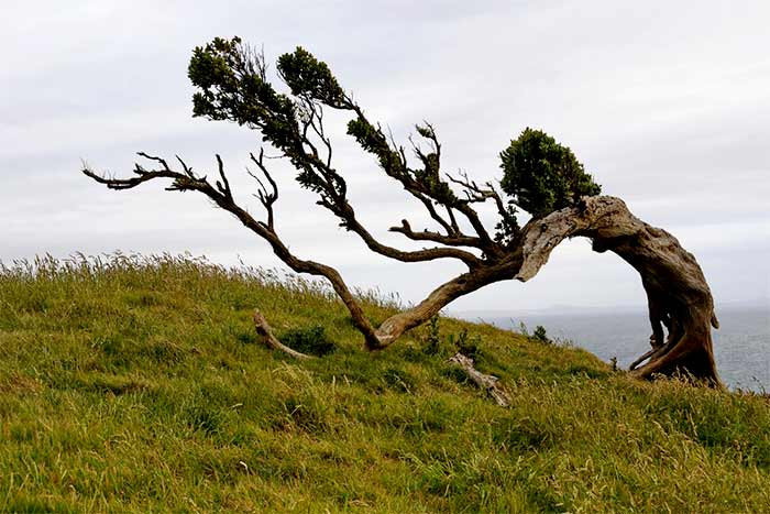 Can a tree survive with no leaves?