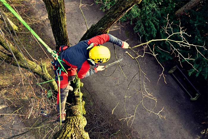 City tree removal Services