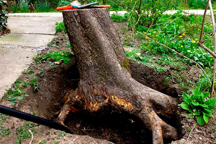 Does stump removal include removing roots too stump removes with roots