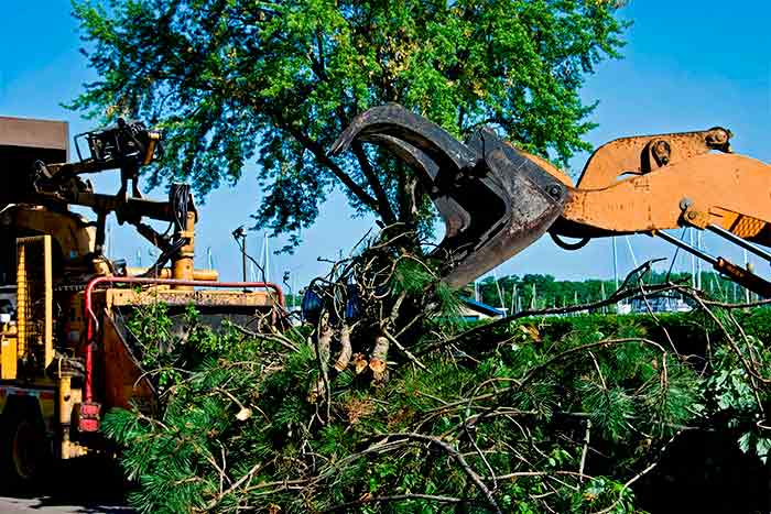 Finding affordable tree removal companies company remove tree