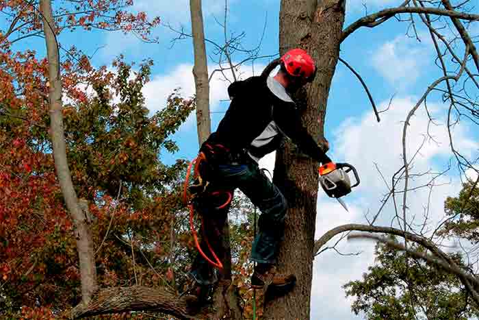 Hiring an arbor tree service pro works