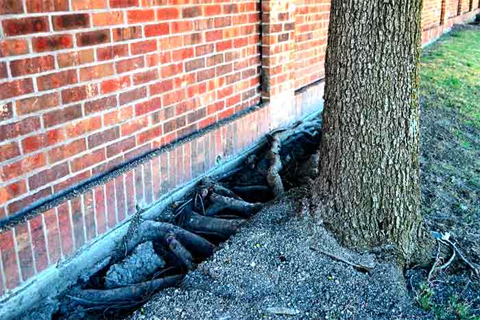 tell if tree is damaging tree foundation