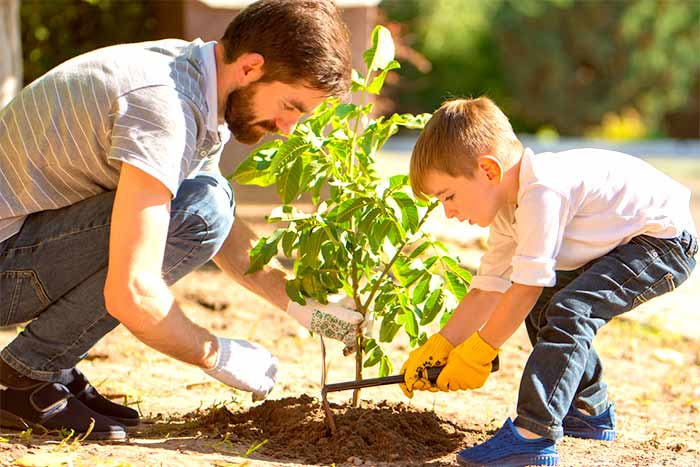 How close can you plant a tree to your home family plant a tree