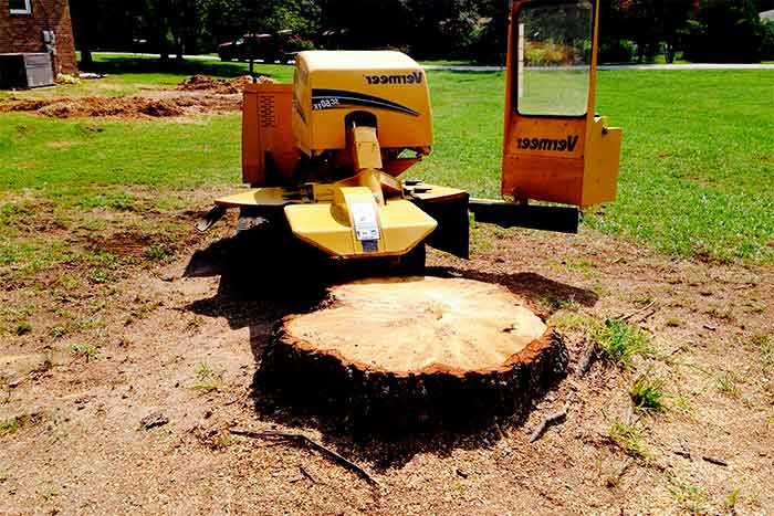 Is stump removal included in the price of tree removal tractor tree removal