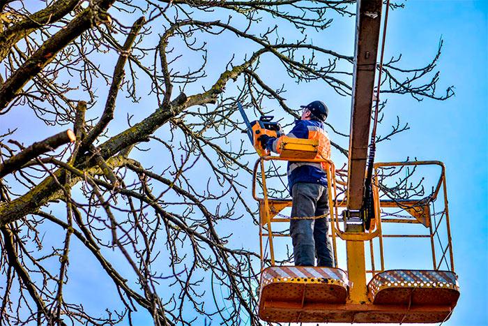 Should an arborist be a member of an association work process