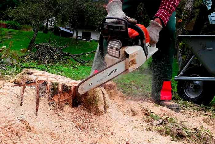 Tree and stump removal cost worker removes stump