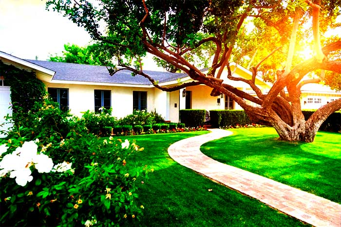 What are some benefits of having a large tree in the yard beautiful garden