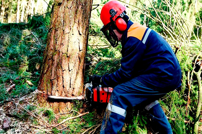 What credentials should an arbor tree service have work in the forest