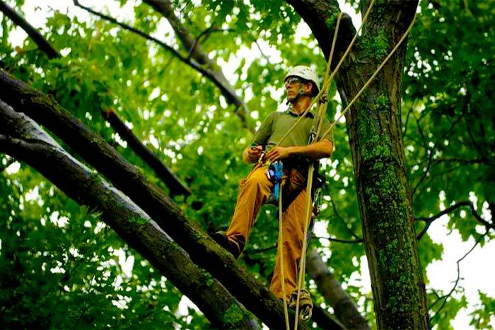 What do arbor tree services do arbor works