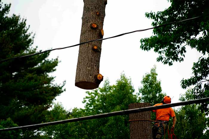 What happens if I remove a tree without a permit removing company
